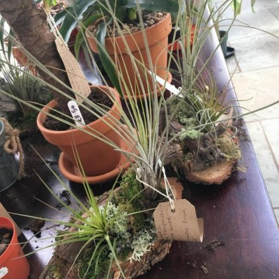 houseplants including air plant