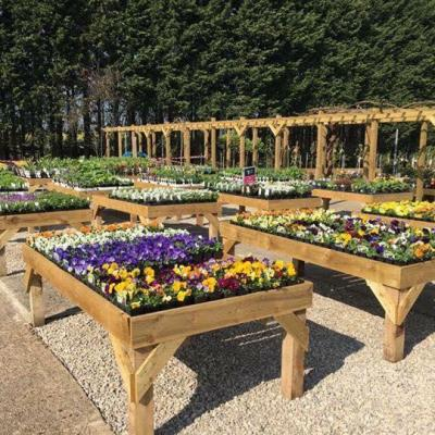 Benches of plants at Fields Garden Centre